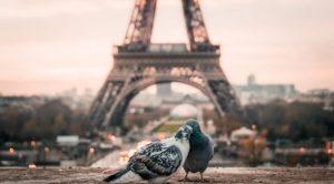 Speeddaten, Parijs en vogels
