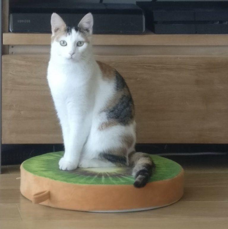 Tinder, Kiwi de kat