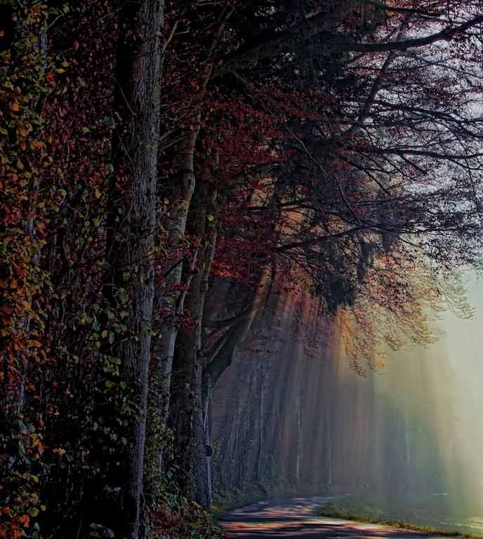 Kamperen, Liefdesvedriet, Treurig bos
