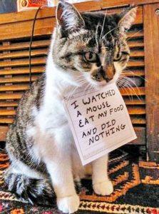 Cadeaus voor Kattenvrouwtjes, Voorbeeld Catshaming