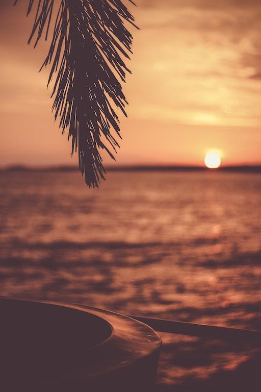 De Ibiza-Truc™, Zonsondergang, Palmboom, Photo by de Jesus Benitez on Unsplash