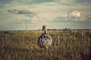 Verkiezigen, Stemmen, Struisvogel, Photo by Ariana Prestes on Unsplash