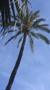 Palmboom Sevilla, Update #3
