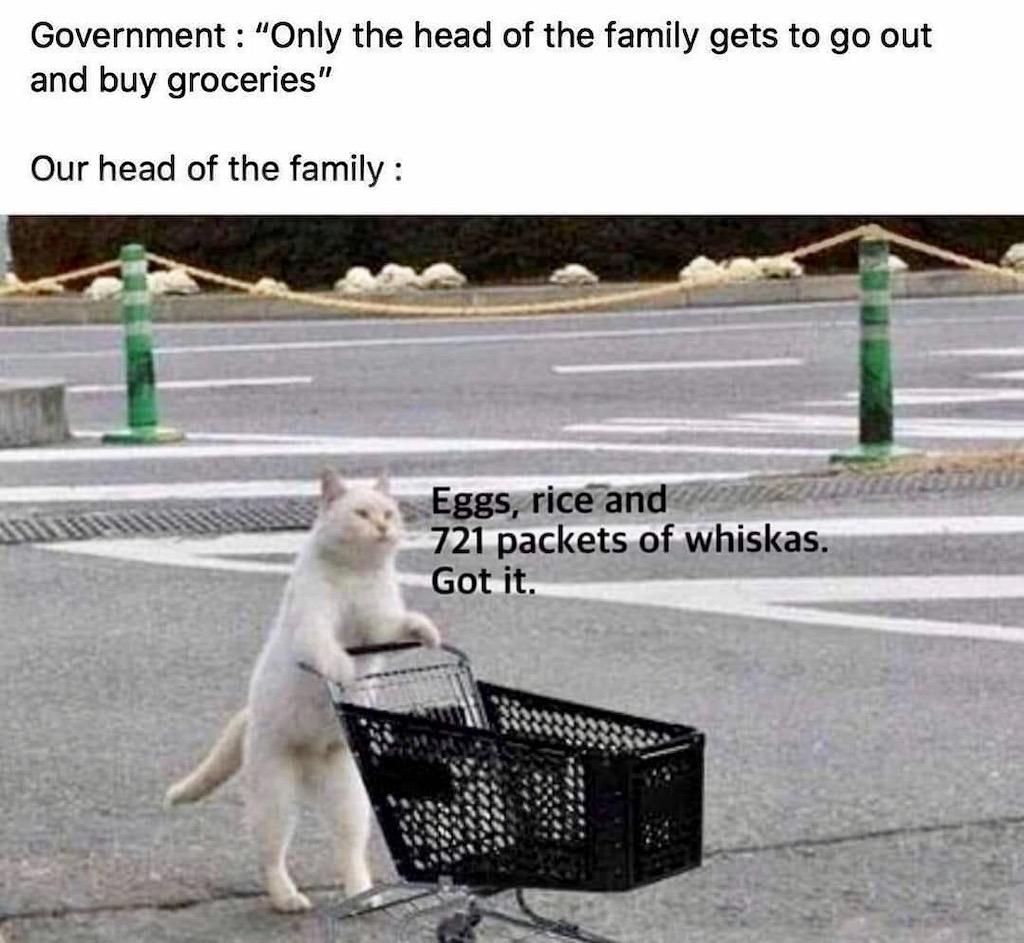 Meme Kat, Week 13, Maart 2020