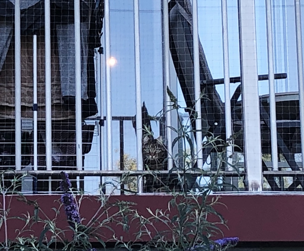 Kroepoek op balkon, 2020, Week 26/ Bh's, Therapie en Copy Coffee