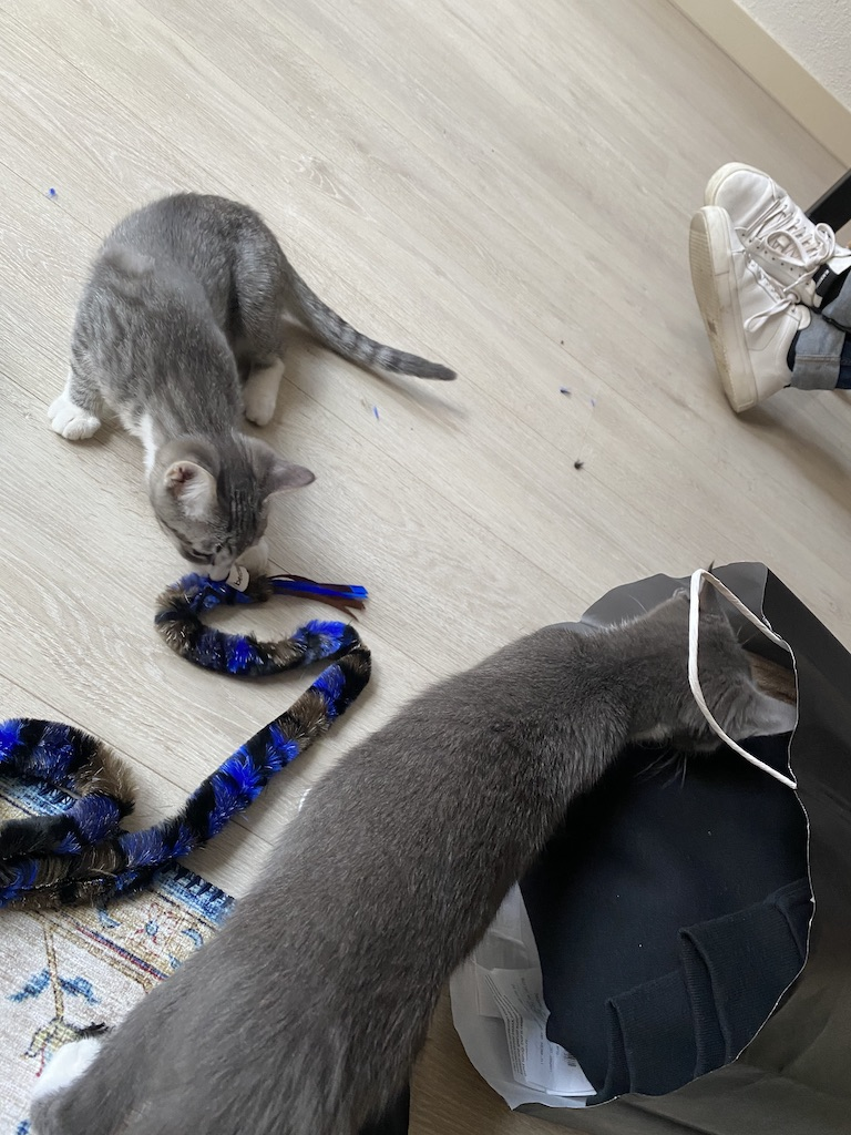 Kittens, Week 39
