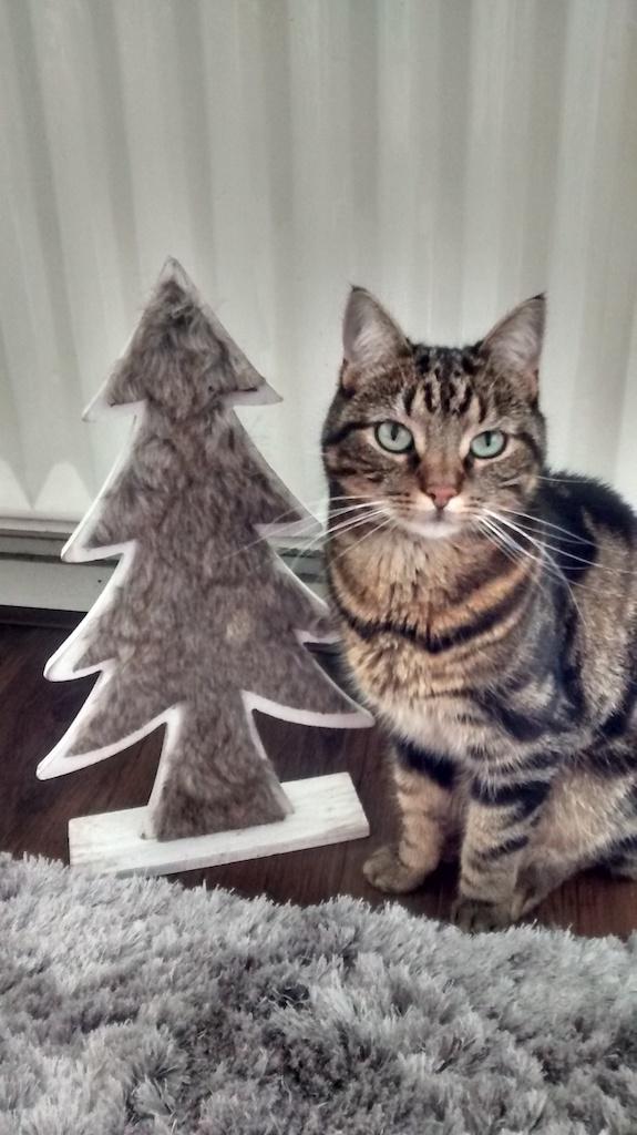 Kroepoek, Kerst, 10 Adventskalenders voor 2020